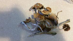 Buy Magic mushrooms Canada